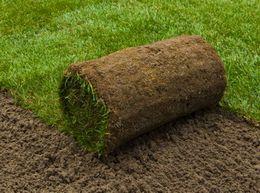 Da li je tepih trava prava opcija za vaše dvorište
