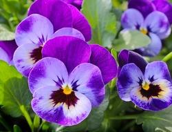Sve što treba da znate za uređenje terase cvećem